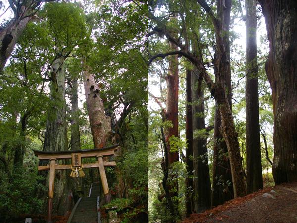野中の一方杉【スーベニアプロジェクト】タビモノ 2011:熊野 vol.4 「熊野を感じる」