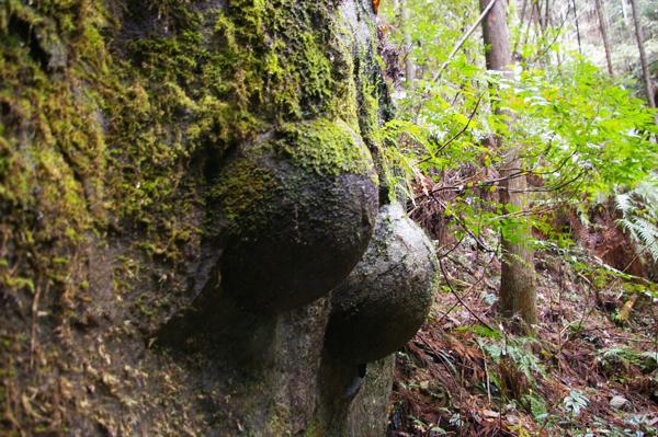 乳古良石(ちごらいし)【スーベニアプロジェクト】タビモノ 2011:熊野 vol.4 「熊野を感じる」