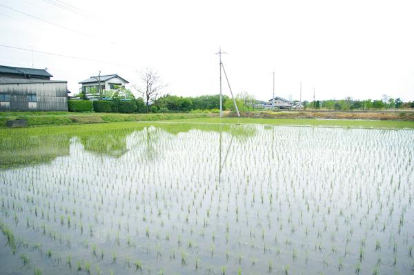 タビモノ 2011:益子 vol.1 「陶器市」 田植え