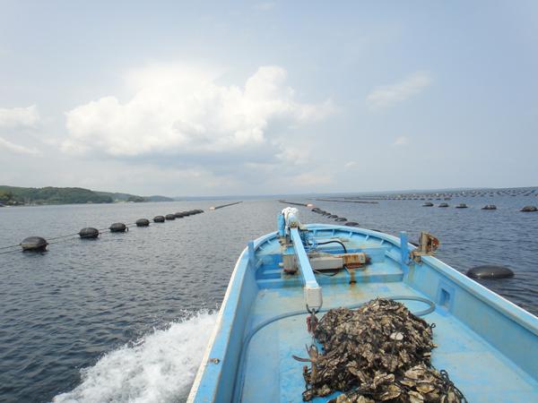 漁業体験【スーベニアプロジェクト】北陸留学:「牡蠣養殖体験から見る里海、里山」