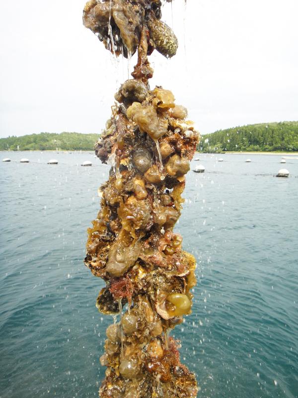 牡蠣養殖体験【スーベニアプロジェクト】北陸留学:「牡蠣養殖体験から見る里海、里山」